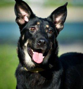 Кортни- молодая собачка в дар