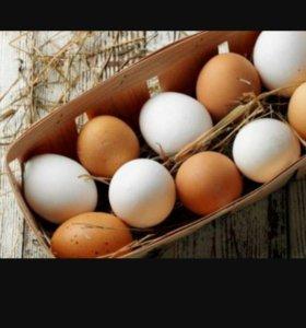 Домашние (куриные) яйца.