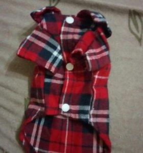 Модная рубашечка