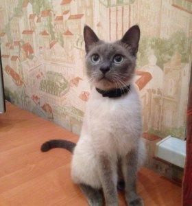 Коты пропали в Горячеводске