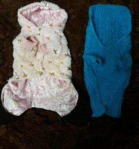 Одежда для маленькой собачки