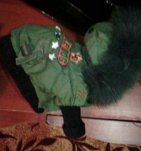 Одежда для чихуахуа