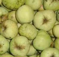 Очень вкусные яблоки!