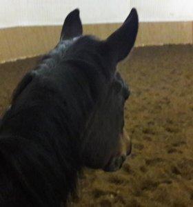 Прокат на лошади