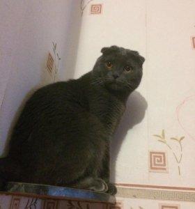 Вислоухий Котик 🐱 приглашает кошечек