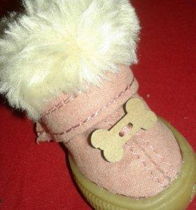 Новые Ботиночки собачке