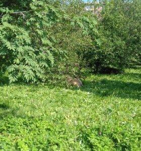 Земельный участок в Кузедеево