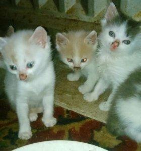 Кто желает кошки отдам бесплатно звоните