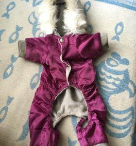 Одежда для собак!
