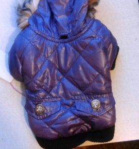 Куртка для собачки маленьких пород.