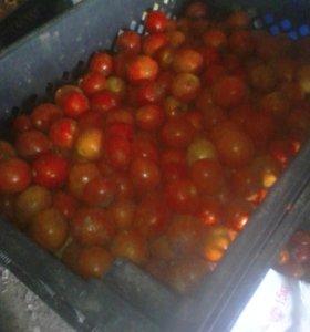 Помидоры на томат
