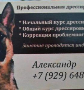 Дрессировка собак)))