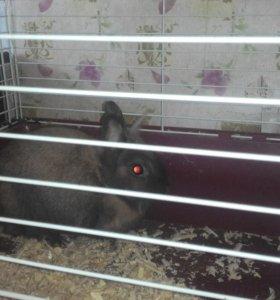 Продам клетку с кроликом...