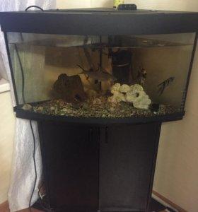 Аквариум 250л с рыбами