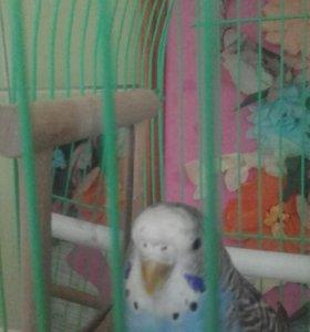 Папугай + клетка в подарок