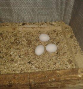 Деревенское яйцо