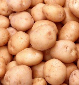 Фермерский картофель