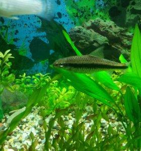 Рыбки +растения