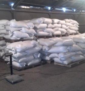 Пшеница на корм зернофураж