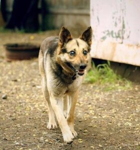 Собака Тиша