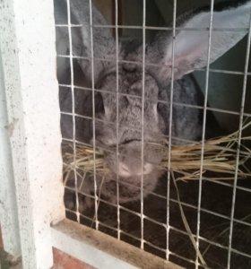 Племеные кролики