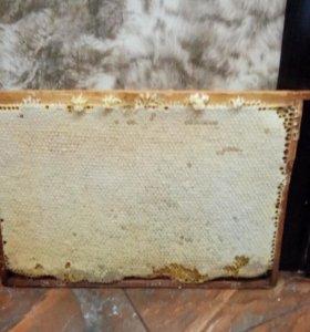 Журналы пчеловодство