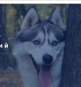 Вязка Кобель Сибирский Хаски для вязки