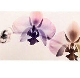 Картина ' Орхидея'