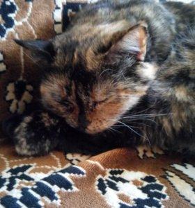 Кошка тстерилизованна