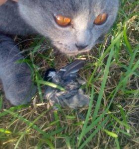 Кот вязка