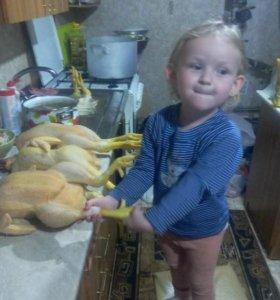 Броллеры цыплята домашние, мясо