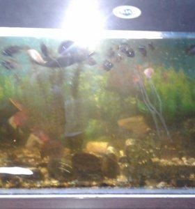 Аквариум 200 литров с рыбами и принадлежностями