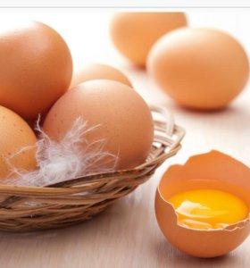Куринные домашние яйца