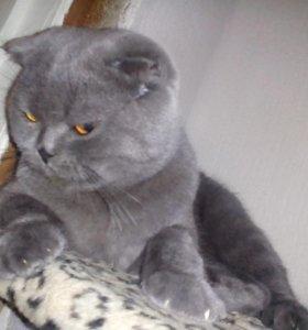 Кота на вязку