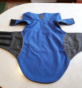 Одежда для мопса