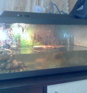 Продам аквариум с двумя красноухами черепахами