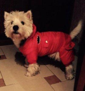 Комбинезон зимний на собаку НОВЫЙ