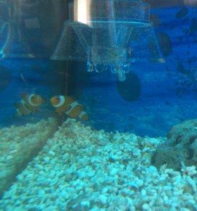 Морской аквариум 110л.