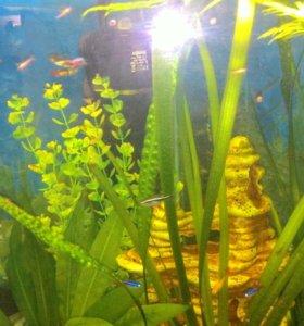 Креветки для аквариума
