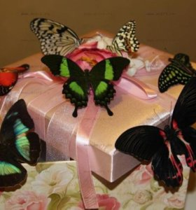 Живые тропические бабочки.Оригинальный подарок