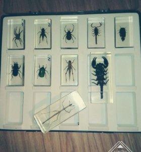 Настоящие насекомые и их знакомые