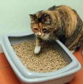 Наполнитель для кошачьего туалета (лотка)