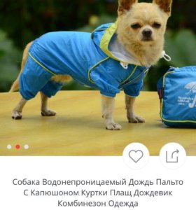 Костюм для собаки