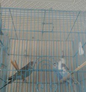 Продам попугайчиков.