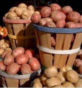 Картофель продам!