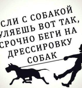 Дрессировка собак любых пород в Елабуге