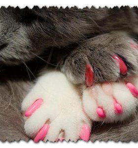Cat scratch protection