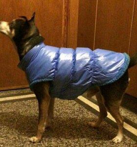 Жилет на собаку 50-55 см