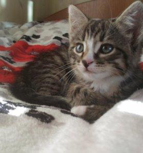 Котёнок (кошечка) ищет дом