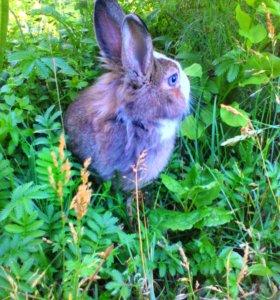 Продается кролик!